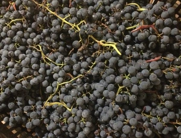 """Why """"Hybrid"""" Isn't Useful — or Important — in Wine"""