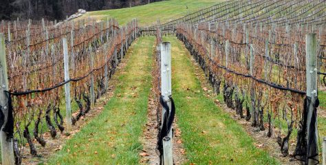 9 from New Jersey: Garden State Wines Worth Seeking Out