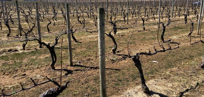 North American Wine News – March 26, 2018
