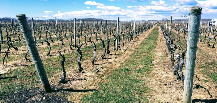 North American Wine News – April 2, 2018