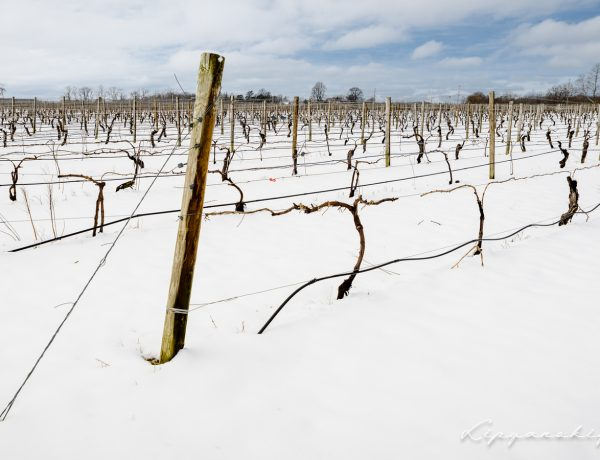 North American Wine News – December 2, 2019