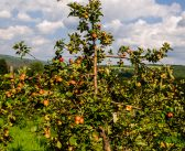 Cider in the Northeast: Tradition Through Innovation