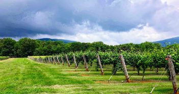 Top Wines and Wineries Within the Monticello AVA (Part 2)