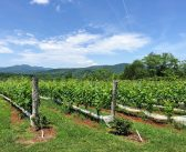 Top Wines and Wineries Within the Monticello AVA (Part 1)