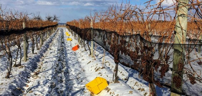 North American Wine News – January 22, 2019