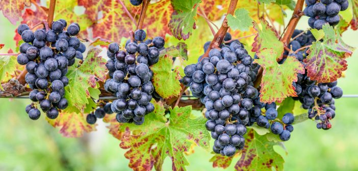 Some Tasting Reports From Around the Finger Lakes – Part 3