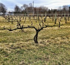 North American Wine News – January 27, 2020