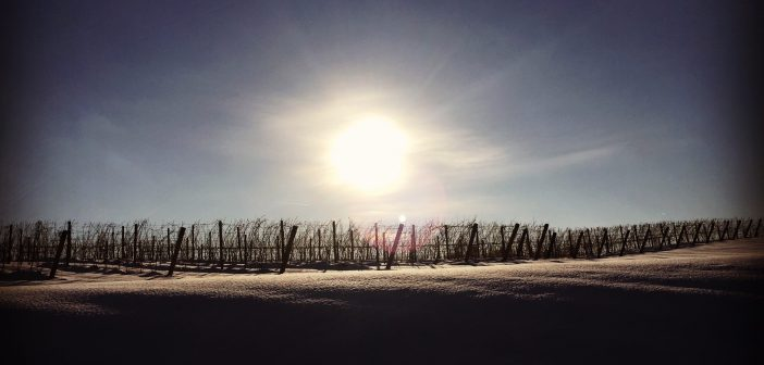 Meet the Mitten: An Introduction to Michigan Wine Country