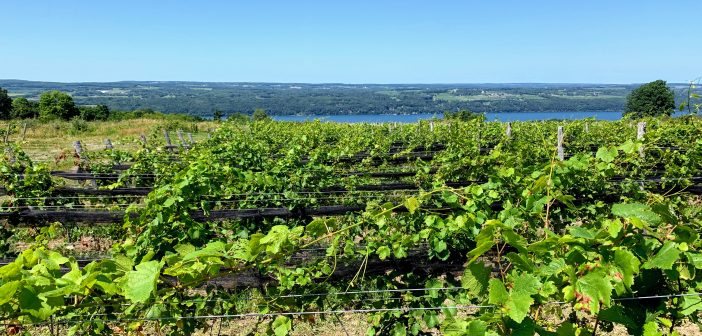 North American Wine News – August 12, 2019